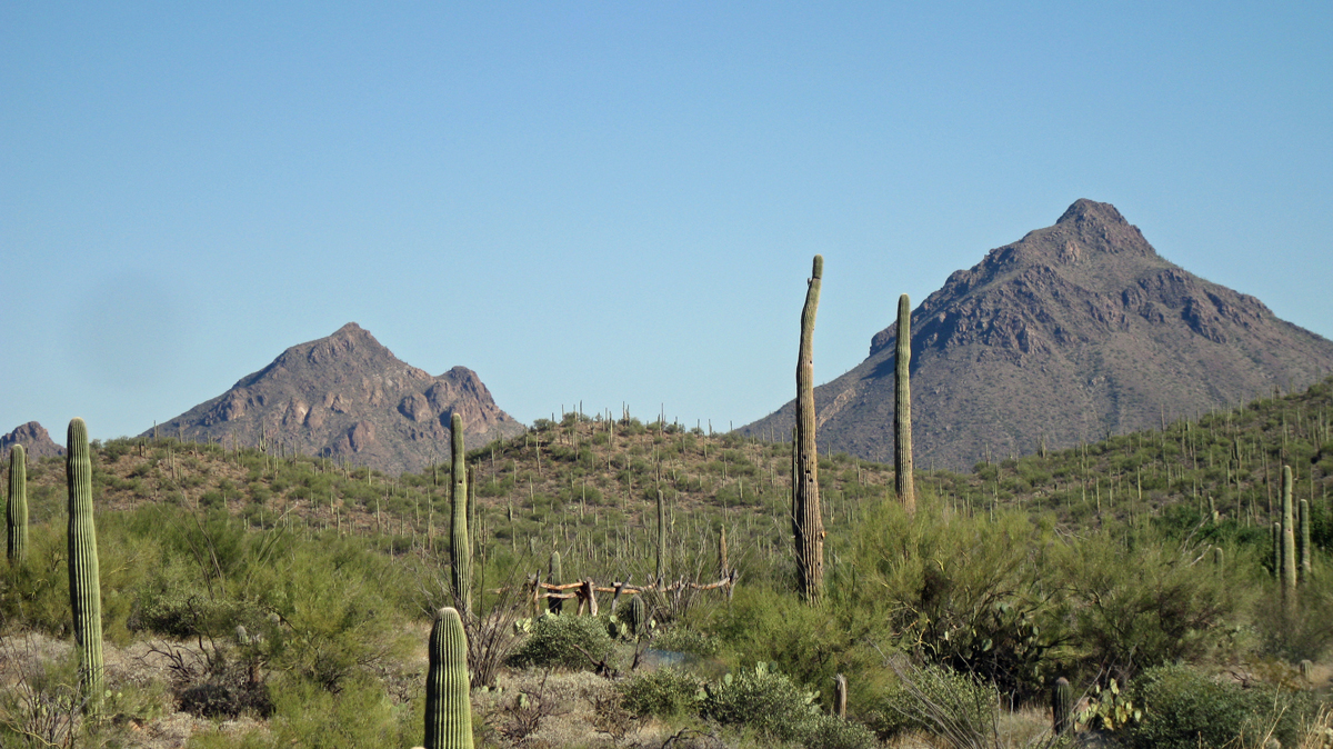10 7 08 Errands and Afternoon in the Tucson Desert