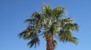 Two Birds in a Palm Tree -- these entertained us while we sat on bench looking at Lake Havasu