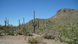 Greetings from the Saguaro Cactii